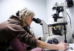 Just like a microscope lets a biologist see life in a fundamentally new way, playtesting lets a game designer see his or her game in a fundamentally new way. Image from Minnesota Public Radio.