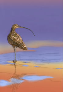 The long-billed curlew, one of the majestic birds from Birds of a Feather.